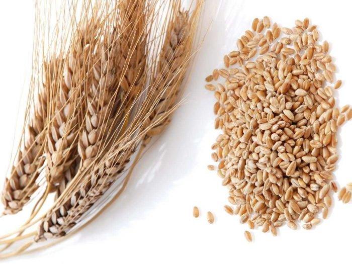 فوائد القمح و مشتقاته