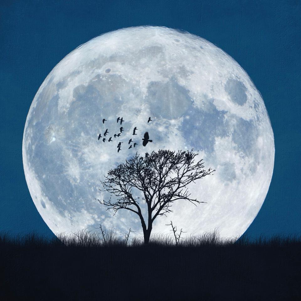 القمر الذئب
