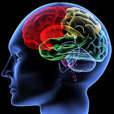 صحة الدماغ