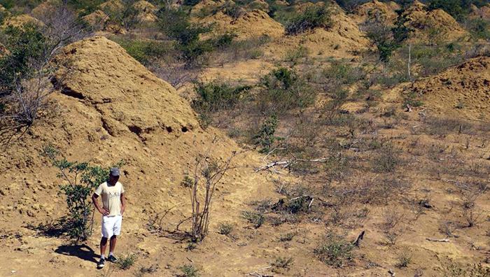 مستعمرات النمل الأبيض في البرازيل