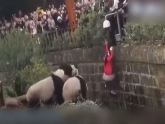 سقوط طفلة بين الدببة