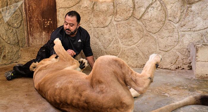 السعودي مربي الحيوانات